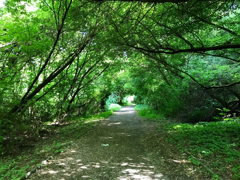 trees over a path - what to pack for Berlin in summer
