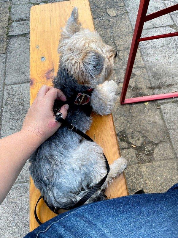 dog at a beer garden